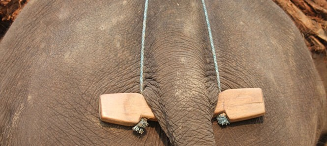 Myanmar Timber Elephant Project | Timber elephants